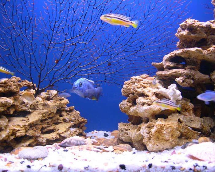 Зачем нужен грунт в аквариуме?