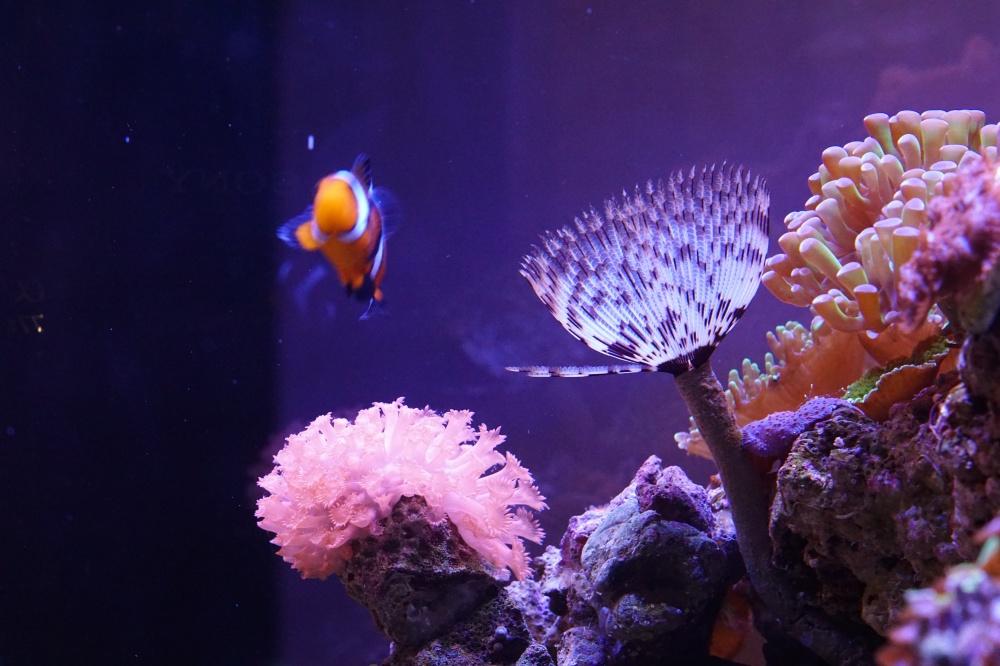 Купить аквариум в Екатеринбурге